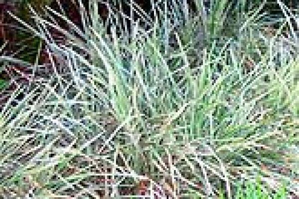 aztec-grass524CFCAA-6219-4BDB-21BC-6ECDC50BABA6.jpg